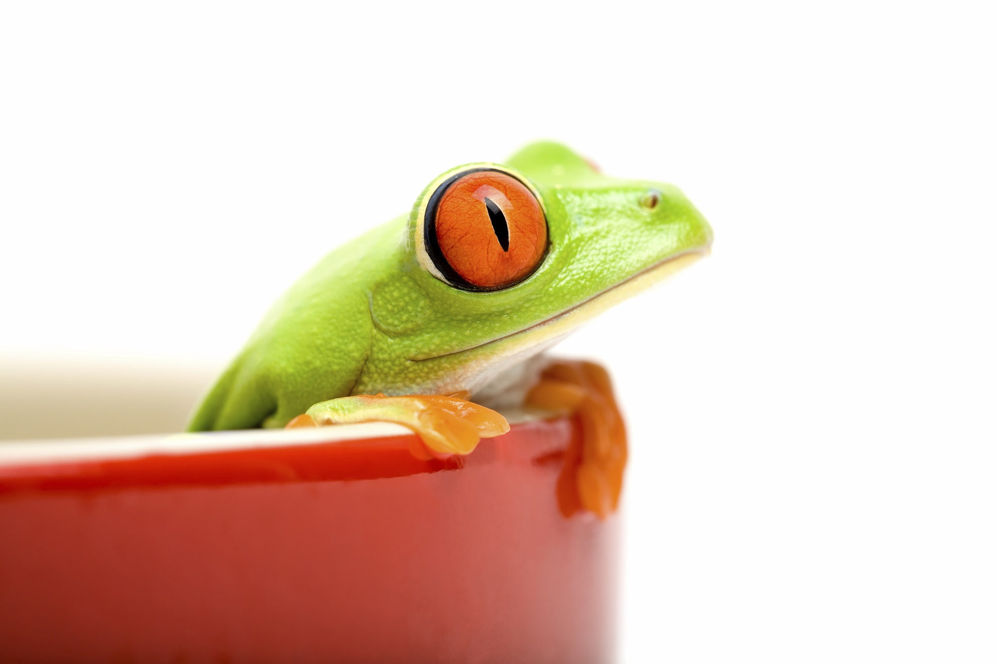 4- iStock_000004093466_Full_Frog_2.jpg