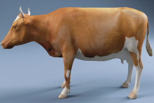 CGI_COW