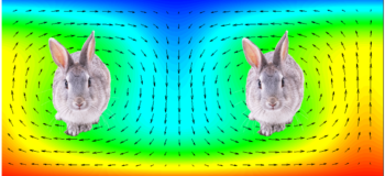 Chaotic Fluid Dynamics Part 1 - Rabbits