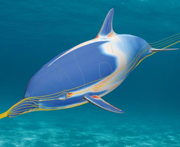 hydrodynamic analysis of the flow around a dolphin