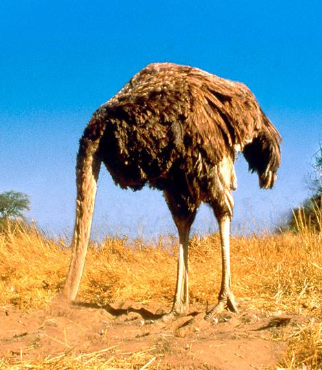 ostrich_468x538.jpg